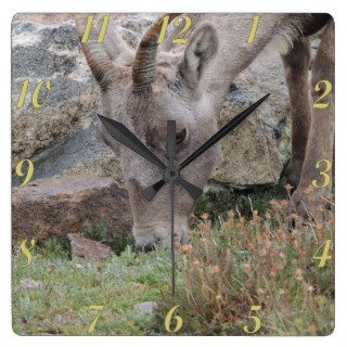 Rocky Mountain Big Horn Sheep Ewe Wall Clock