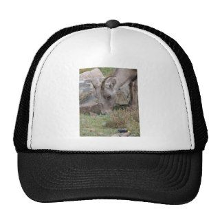 Rocky Mountain Big Horn Sheep Ewe Trucker Hats