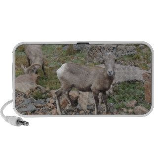 Rocky Mountain Big Horn Sheep Ewe Notebook Speaker
