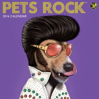 2016 Pets Rock Wall Calendar   17527325 Top