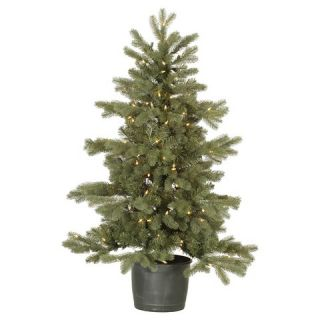 35 Frasier Fir Pot 150CL Dura Lit   Green